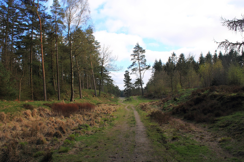 westlicher Ochsenweg Leck